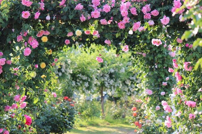大宮の自然豊かな結婚式場とおすすめブライダルフェア3選